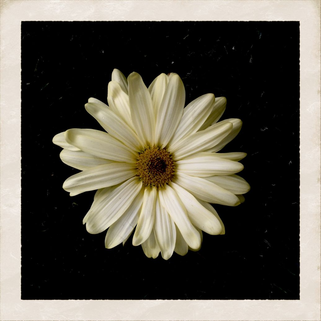Sb Projects Cody Simpson Flower